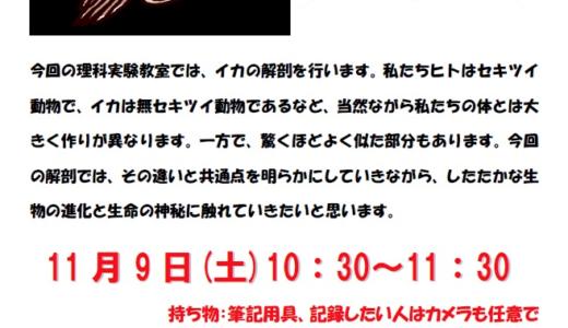 イカのかわいさの理由は目?!【11/9】理科実験教室で秘密を知ろう!